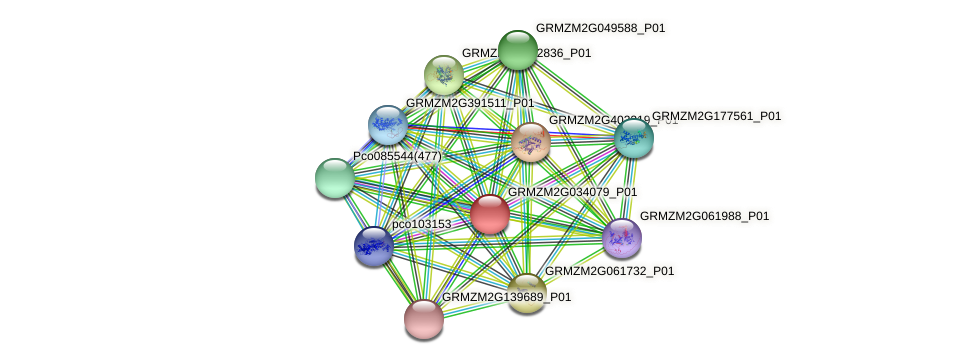 GRMZM2G034079_P01 protein (Zea mays) - STRING interaction network