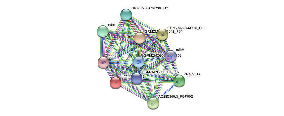 GRMZM2G034096_P01 protein (Zea mays) - STRING interaction network
