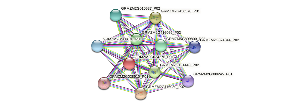 GRMZM2G034276_P01 protein (Zea mays) - STRING interaction network