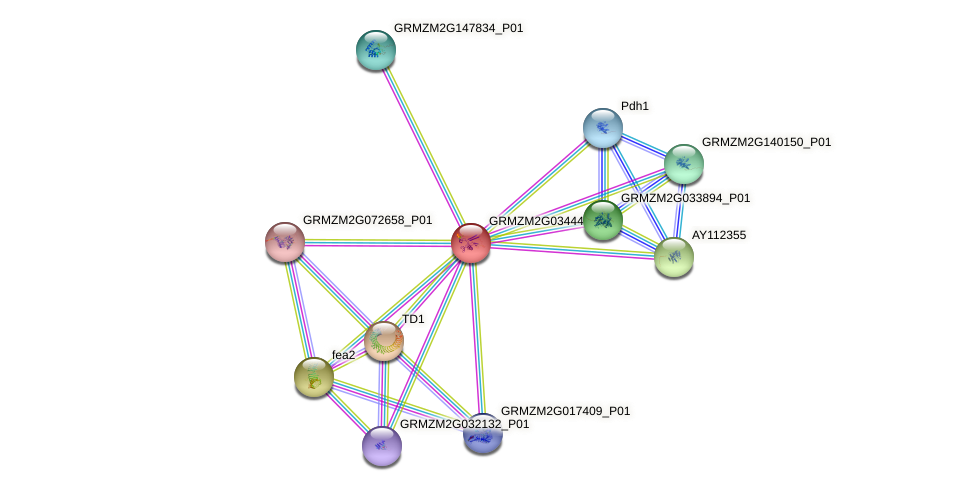 GRMZM2G034442_P01 protein (Zea mays) - STRING interaction network