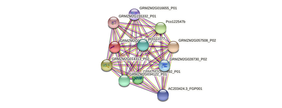 GRMZM2G034511_P02 protein (Zea mays) - STRING interaction network
