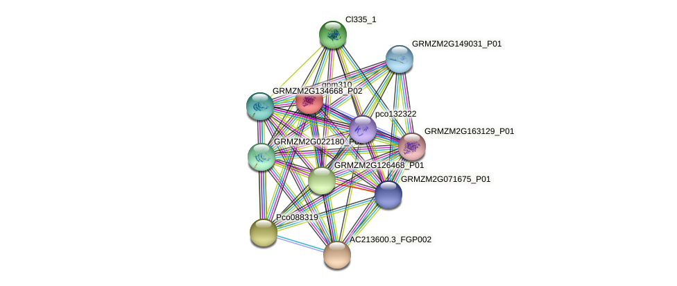 gpm310 protein (Zea mays) - STRING interaction network