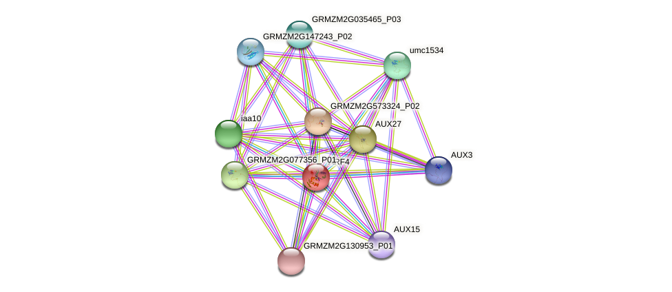 ARF4 protein (Zea mays) - STRING interaction network