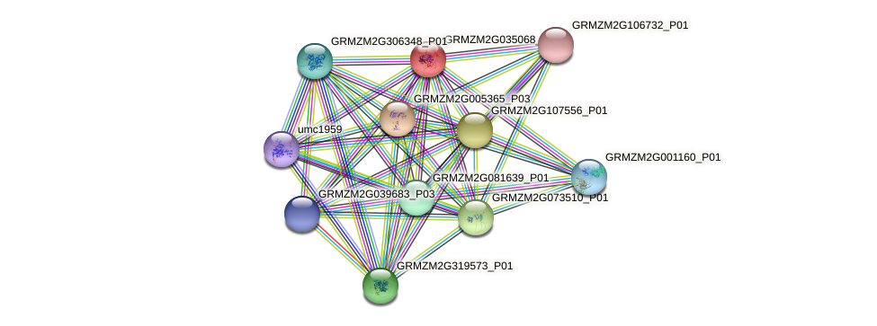 Zm.23234 protein (Zea mays) - STRING interaction network