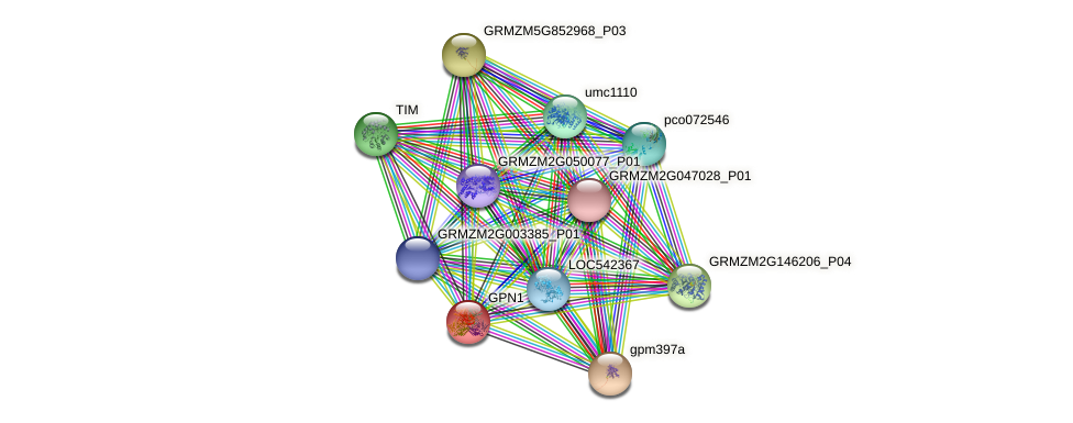 GPN1 protein (Zea mays) - STRING interaction network