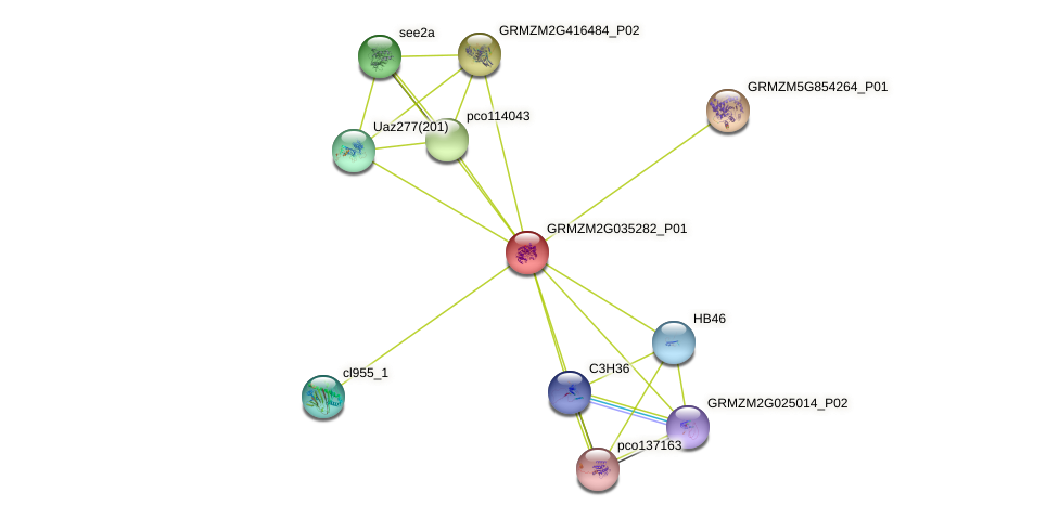 Zm.158709 protein (Zea mays) - STRING interaction network