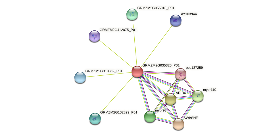 Zm.152648 protein (Zea mays) - STRING interaction network