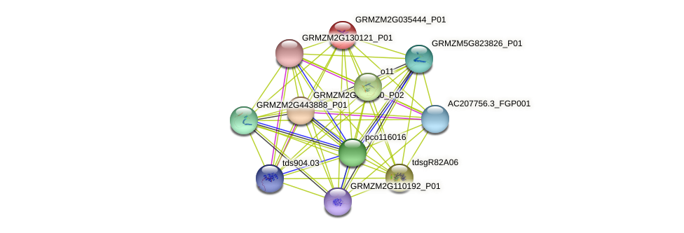GRMZM2G035444_P01 protein (Zea mays) - STRING interaction network