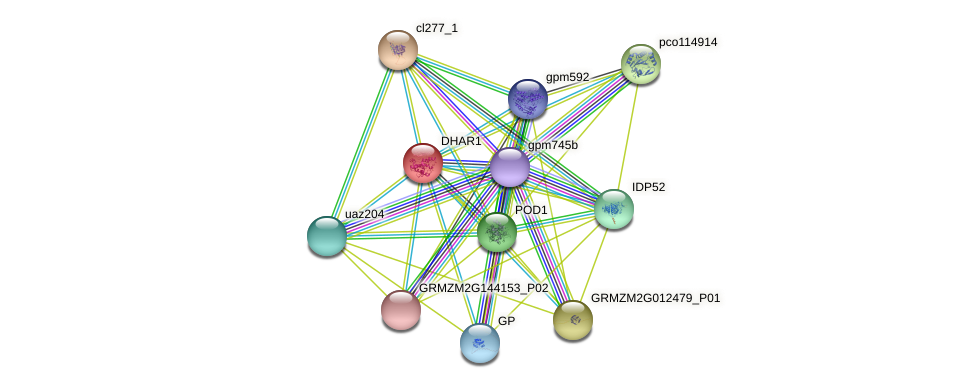 DHAR1 protein (Zea mays) - STRING interaction network