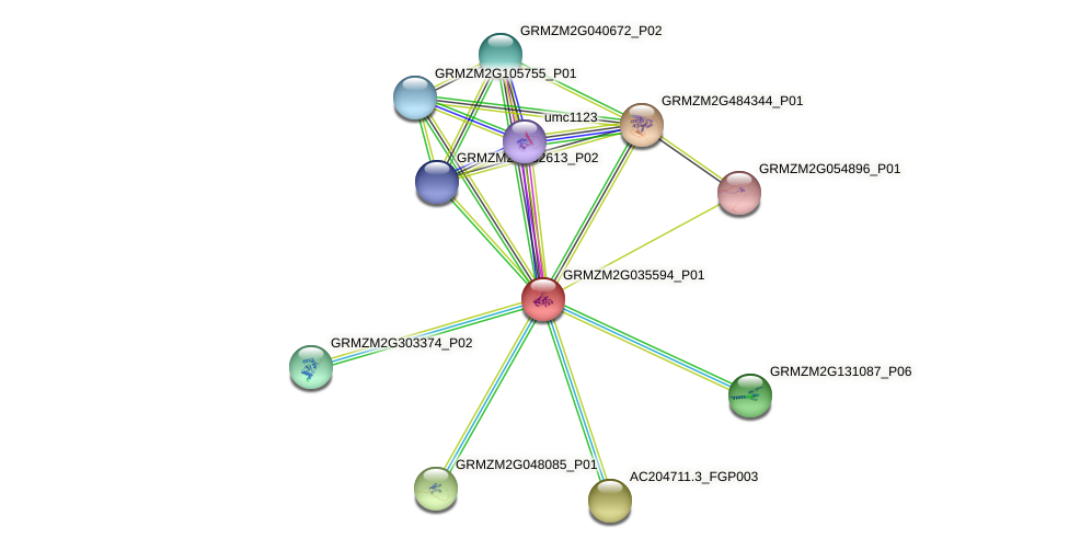 GRMZM2G035594_P01 protein (Zea mays) - STRING interaction network