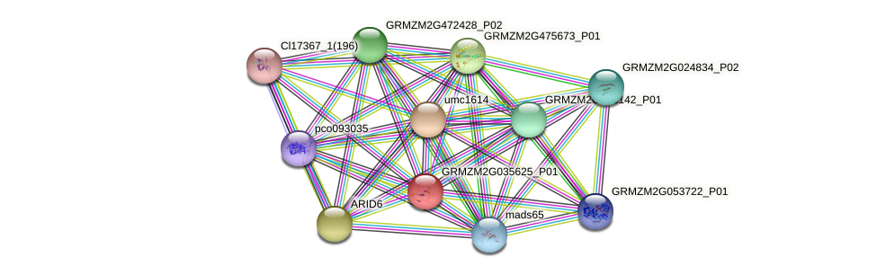GRMZM2G035625_P01 protein (Zea mays) - STRING interaction network