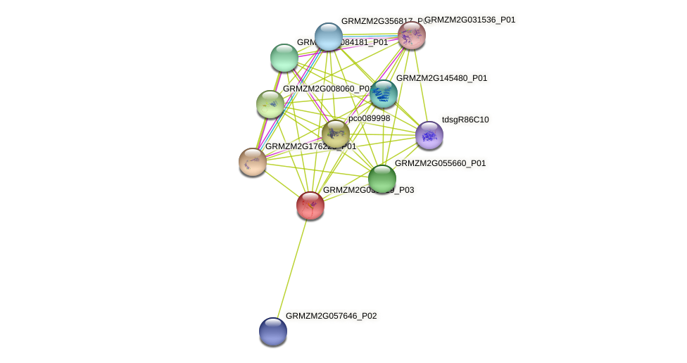 GRMZM2G035719_P03 protein (Zea mays) - STRING interaction network