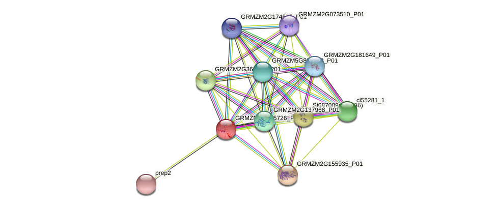 GRMZM2G035726_P01 protein (Zea mays) - STRING interaction network