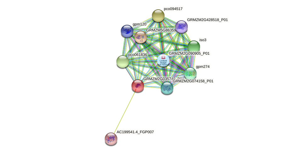 100502394 protein (Zea mays) - STRING interaction network