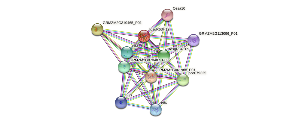 GRMZM2G035807_P01 protein (Zea mays) - STRING interaction network