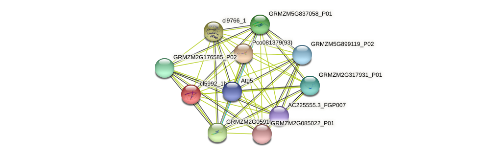 cl5992_1b protein (Zea mays) - STRING interaction network