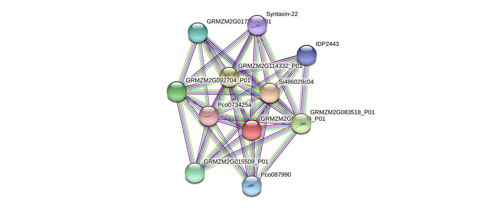 GRMZM2G035893_P01 protein (Zea mays) - STRING interaction network