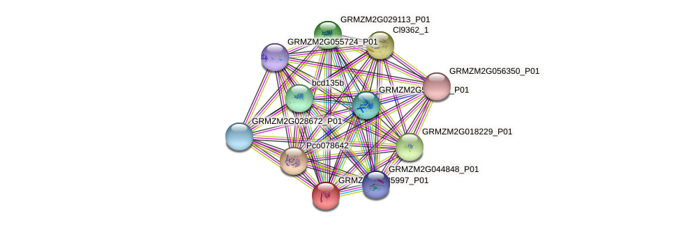 GRMZM2G035997_P01 protein (Zea mays) - STRING interaction network