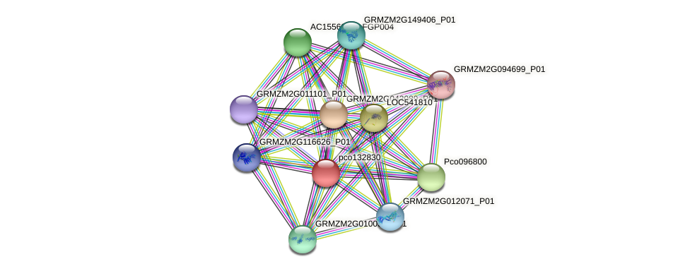 pco132830 protein (Zea mays) - STRING interaction network