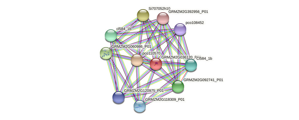 Zm.98813 protein (Zea mays) - STRING interaction network