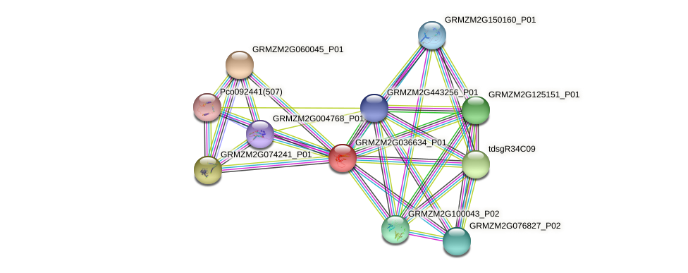 GRMZM2G036634_P01 protein (Zea mays) - STRING interaction network