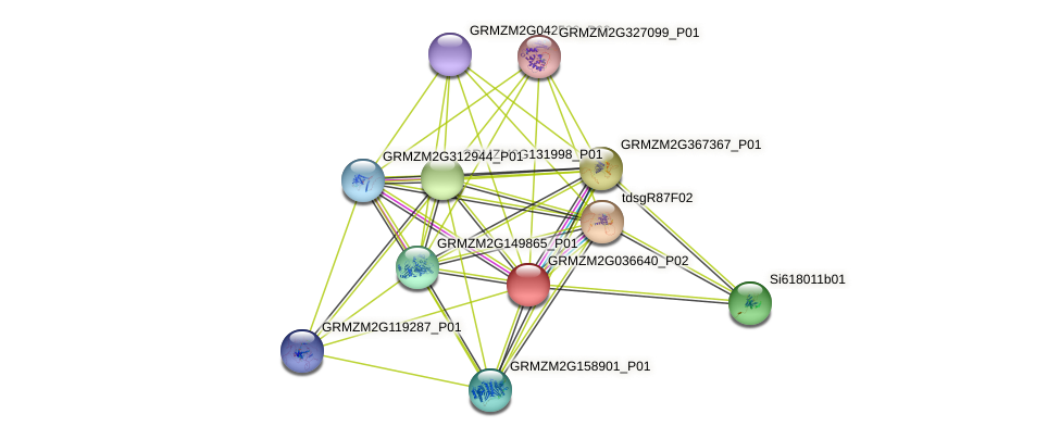 GRMZM2G036640_P02 protein (Zea mays) - STRING interaction network