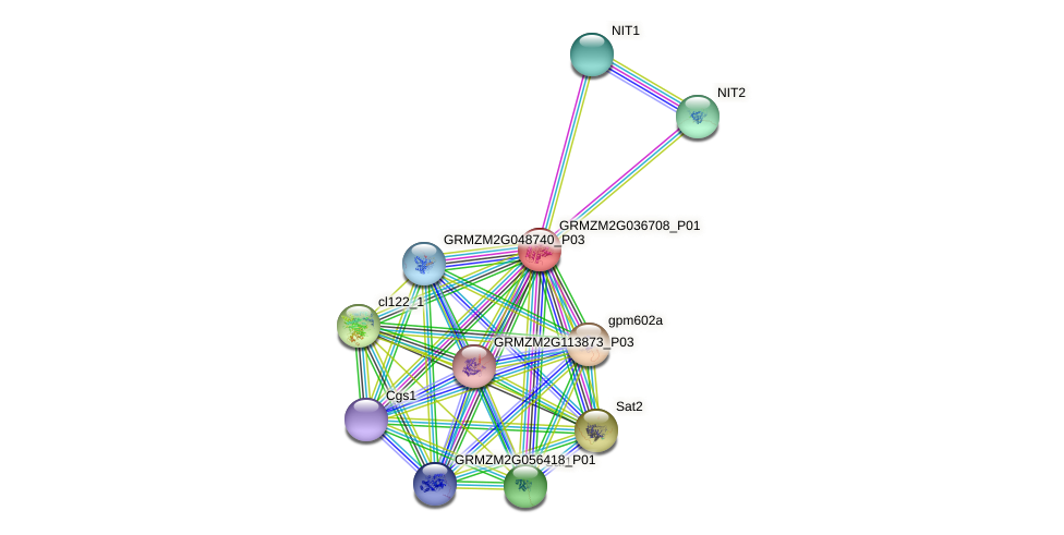 Zm.807 protein (Zea mays) - STRING interaction network