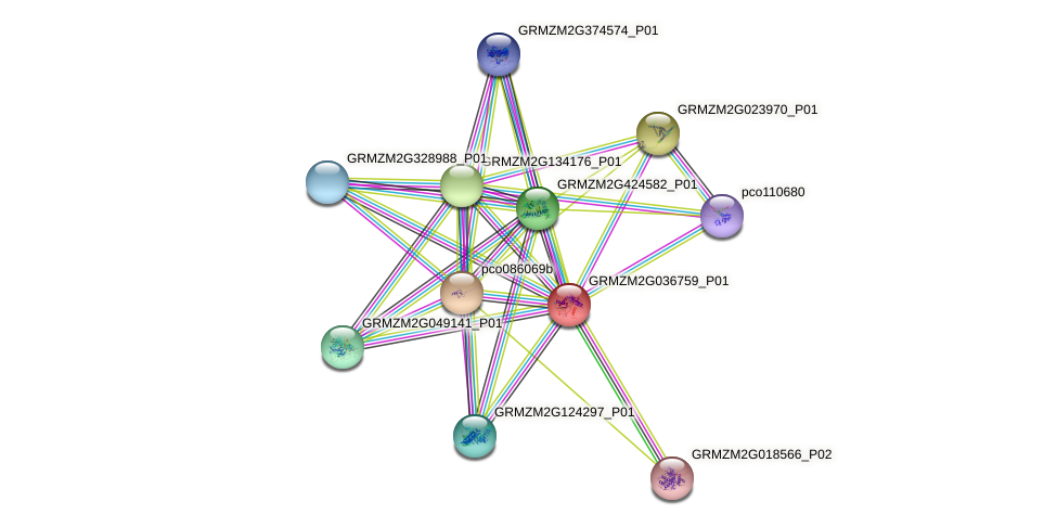 GRMZM2G036759_P01 protein (Zea mays) - STRING interaction network