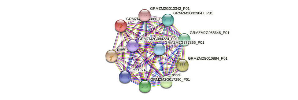 GRMZM2G036880_P01 protein (Zea mays) - STRING interaction network