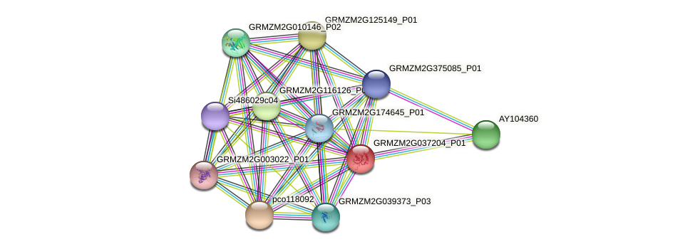 GRMZM2G037204_P01 protein (Zea mays) - STRING interaction network