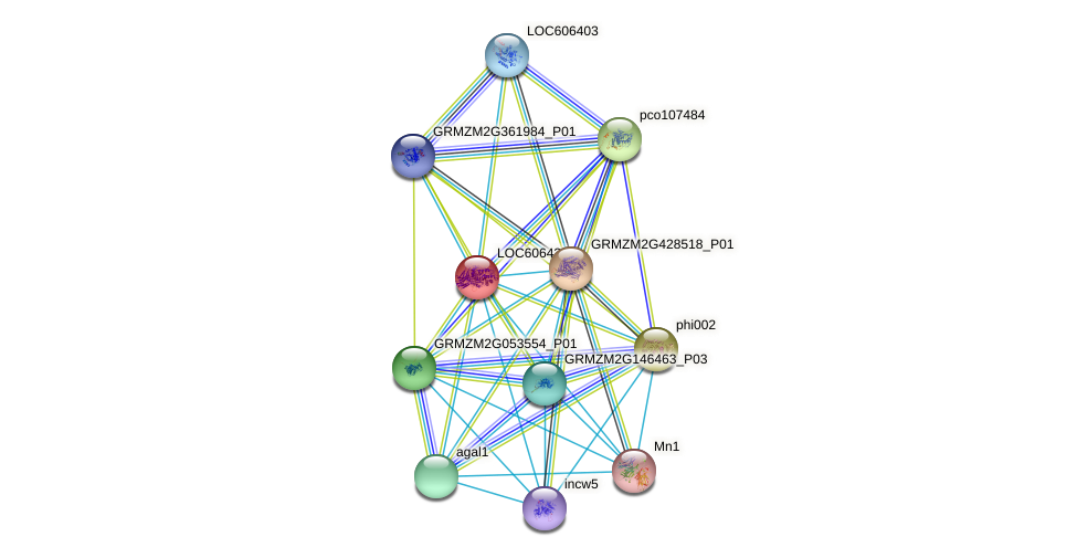 LOC606431 protein (Zea mays) - STRING interaction network