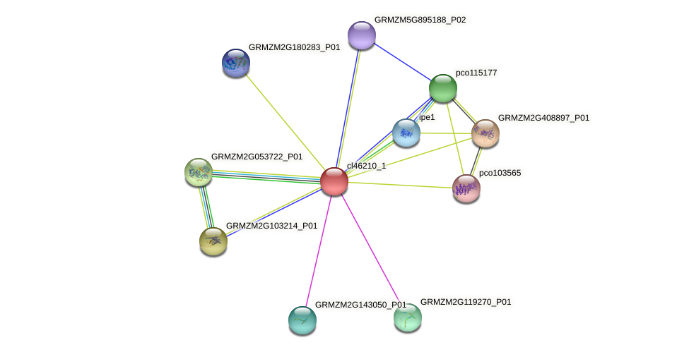 cl46210_1 protein (Zea mays) - STRING interaction network