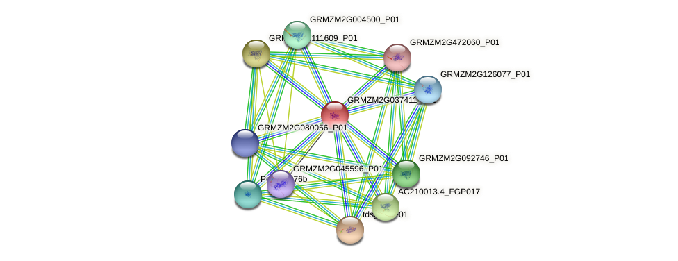 103633411 protein (Zea mays) - STRING interaction network