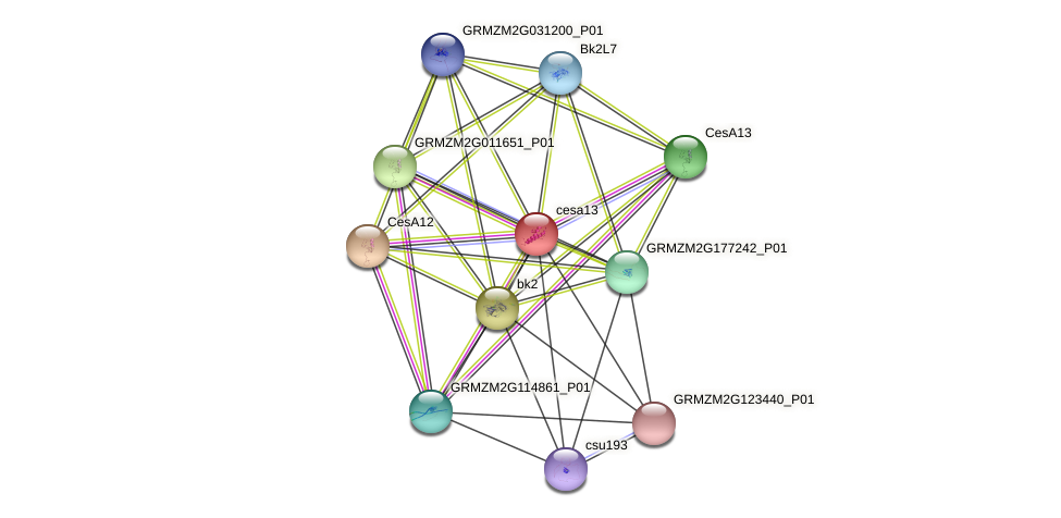 GRMZM2G037413_P03 protein (Zea mays) - STRING interaction network