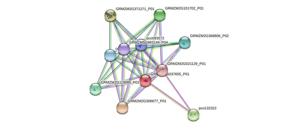 GRMZM2G037655_P01 protein (Zea mays) - STRING interaction network