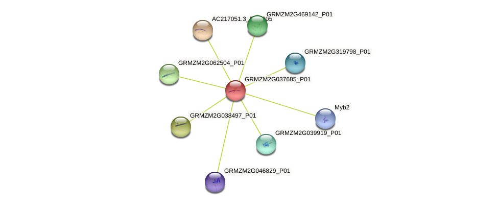 GRMZM2G037685_P01 protein (Zea mays) - STRING interaction network