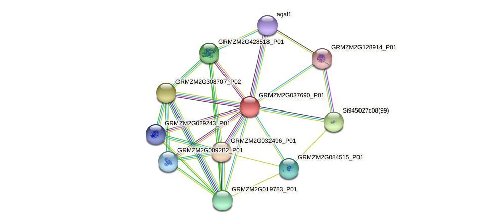 GRMZM2G037690_P01 protein (Zea mays) - STRING interaction network