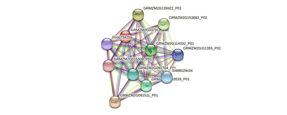 GRMZM2G037912_P01 protein (Zea mays) - STRING interaction network