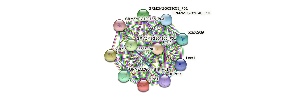 GRMZM2G038013_P01 protein (Zea mays) - STRING interaction network