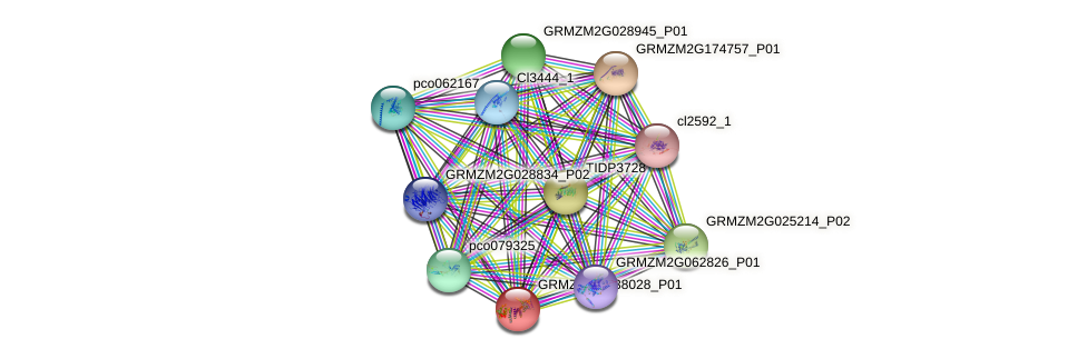 GRMZM2G038028_P01 protein (Zea mays) - STRING interaction network