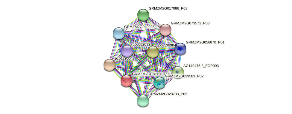 GRMZM2G038126_P01 protein (Zea mays) - STRING interaction network