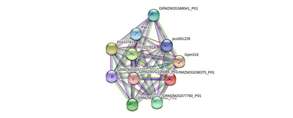 GRMZM2G038375_P01 protein (Zea mays) - STRING interaction network