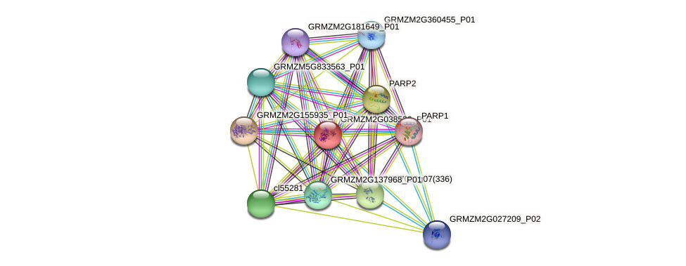 GRMZM2G038536_P01 protein (Zea mays) - STRING interaction network
