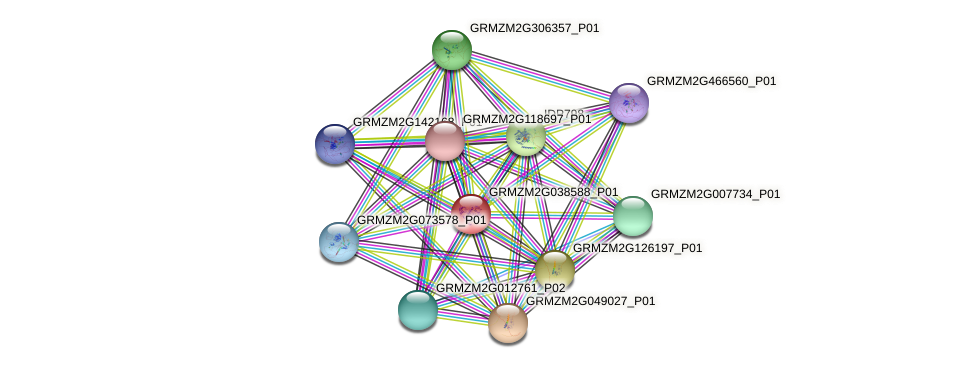 GRMZM2G038588_P01 protein (Zea mays) - STRING interaction network