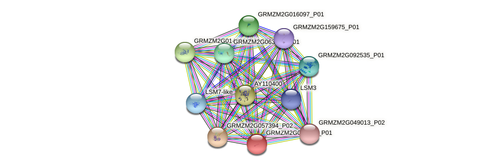 GRMZM2G038606_P01 protein (Zea mays) - STRING interaction network