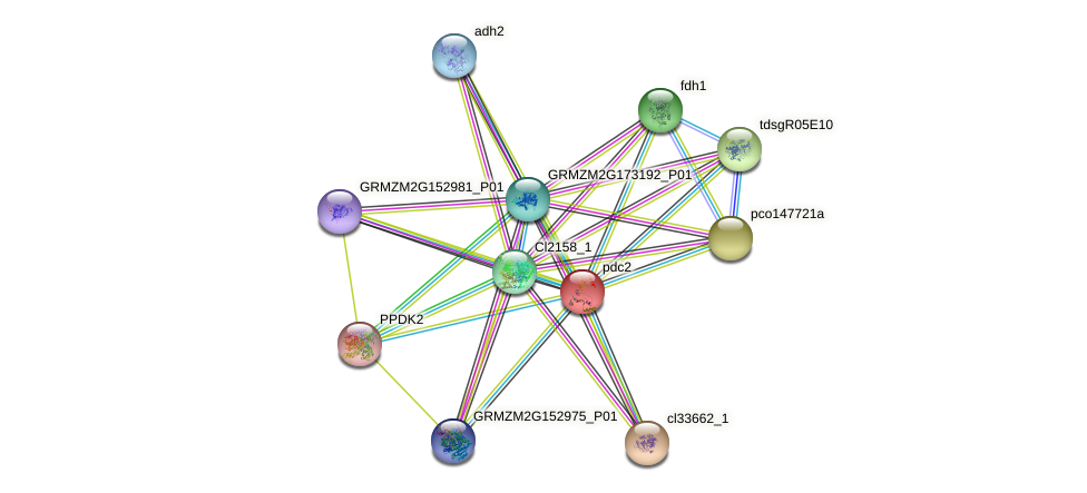 PDC2 protein (Zea mays) - STRING interaction network