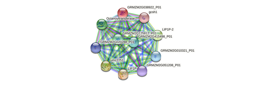 GRMZM2G038922_P01 protein (Zea mays) - STRING interaction network