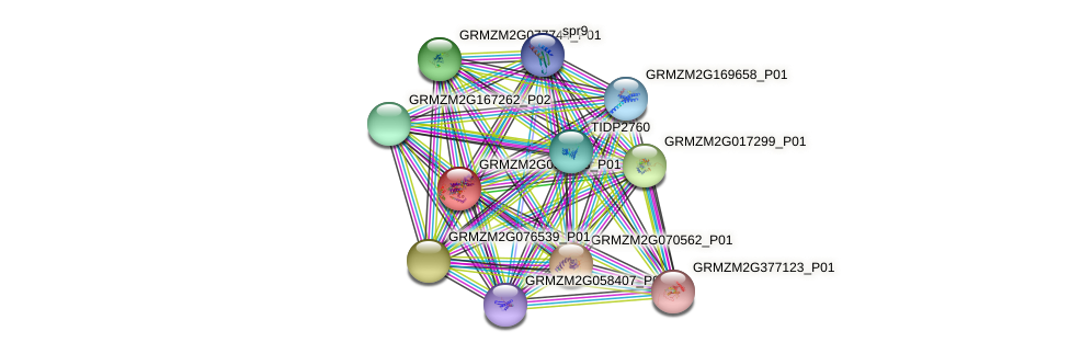 GRMZM2G038953_P01 protein (Zea mays) - STRING interaction network