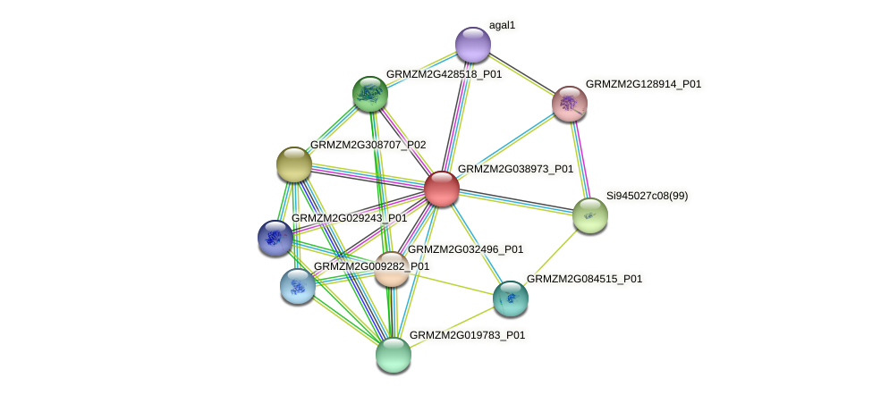 Zm.7493 protein (Zea mays) - STRING interaction network