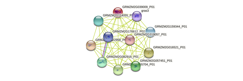 Zm.145444 protein (Zea mays) - STRING interaction network